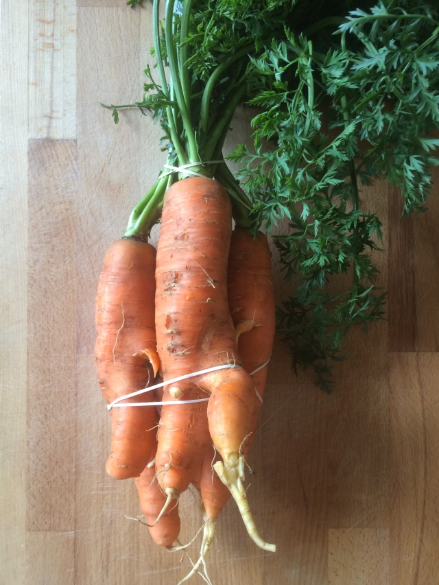 maple and harissa carrots 1