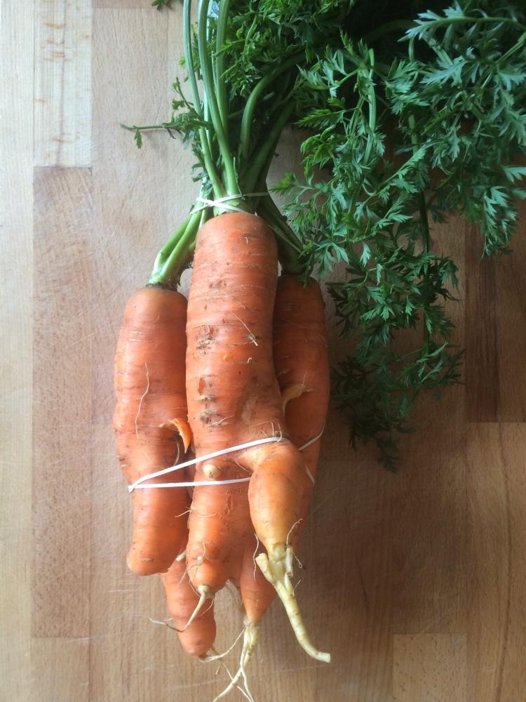 maple and harissa carrots 1