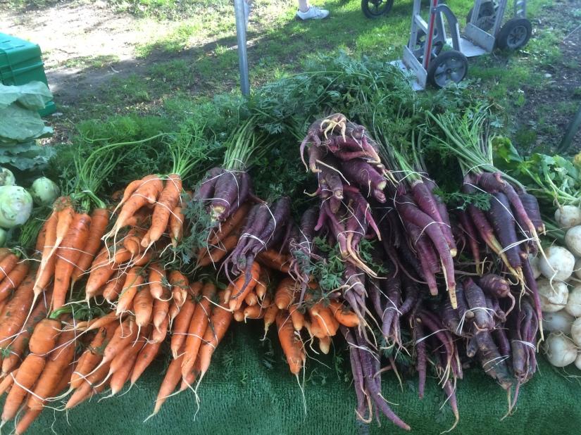maple and harissa carrots 7